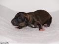 Pup 3 foto 1