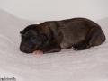 Pup 3 foto 2