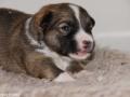 s Pup 1 Lotta 13 dagen oud