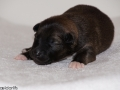 s Pup 2 Askur 1 week oud (2)