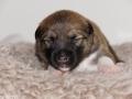 s Pup 6 Kappi 13 dagen oud
