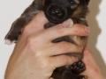 s Pup 3 Álfkona 2 weken oud (2)
