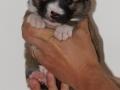 s Pup 1 Lotta 3 weken oud