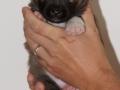 s Pup 5 Elja 3 weken oud