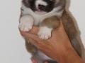s Pup 1 Lotta 4 weken oud