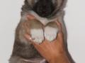 s Pup 4 Baldur 6 weken oud