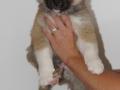 s Pup 6 Kappi 7 weken oud