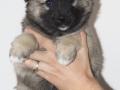 s Dag 42 Pup 2 Lýsa