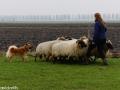 s IJslandse Hond Eskil schapendrijven 2016-12-17 (7)