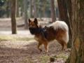 Foto IJslandse Hond 010 reu