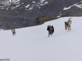 s IJslandse Honden 21