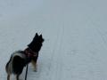 Elska op de piste staand