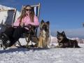 IJslandse Honden Wintersport Oostenrijk 2016 (11)