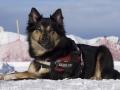 IJslandse Honden Wintersport Oostenrijk 2016 (12)