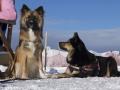 IJslandse Honden Wintersport Oostenrijk 2016 (14)