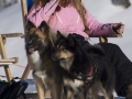 IJslandse Honden Wintersport Oostenrijk 2016 (17)