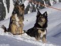IJslandse Honden Wintersport Oostenrijk 2016 (19)