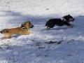 IJslandse Honden Wintersport Oostenrijk 2016 (23)