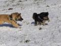 IJslandse Honden Wintersport Oostenrijk 2016 (29)
