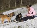 IJslandse Honden Wintersport Oostenrijk 2016 (30)