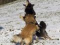IJslandse Honden Wintersport Oostenrijk 2016 (32)
