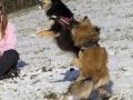 IJslandse Honden Wintersport Oostenrijk 2016 (33)