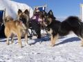 IJslandse Honden Wintersport Oostenrijk 2016 (7)
