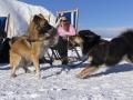 IJslandse Honden Wintersport Oostenrijk 2016 (8)