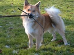 Hond (112)