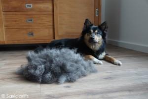 DSC01596 Elska IJslandse Hond