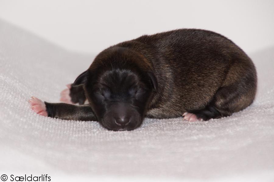 Pup 2 foto 1