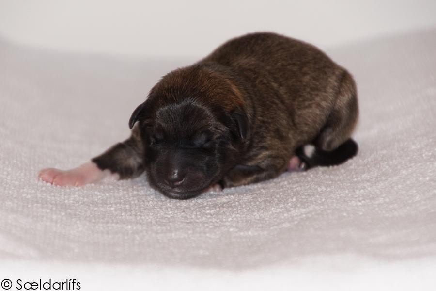 Pup 7 foto 1